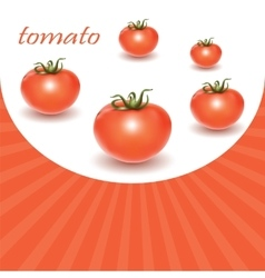 Red fresh tomatoes vector image