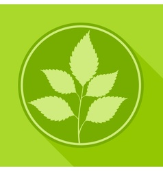 Branch with leaves in round vector image vector image