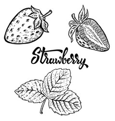 set of hand drawn strawberry design elements for vector image vector image