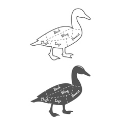 Vintage diagram guide for duck cutting vector image