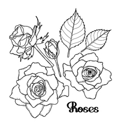 Graphic roses collection vector image vector image