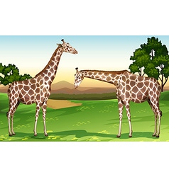 Two giraffes in the field vector image vector image