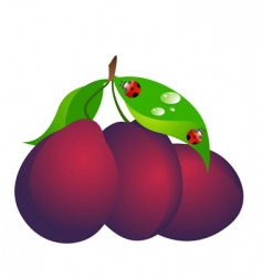 plum vector image vector image