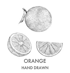 Sketch of the whole orange half and segment hand vector