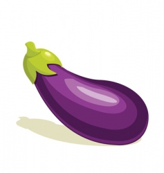 eggplant vector image vector image