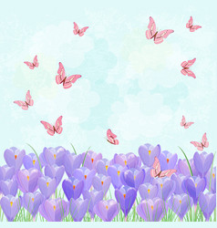 Field of blooming crocus with flying butterflies vector
