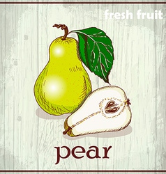 Hand drawing of pears fresh fruit sketch vector