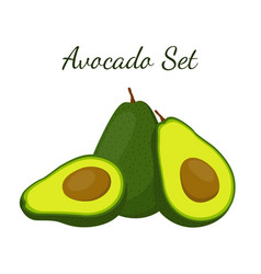 Avocado whole and slice tropical summer fruit vector