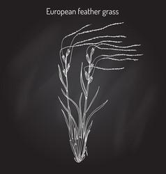European feather grass stipa pennata flowering vector