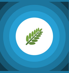 Isolated acacia leaf flat icon leaves vector