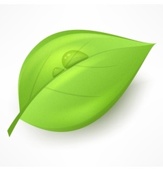 Green leaf with drop water vector image vector image