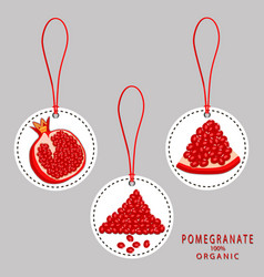 the pomegranate vector image