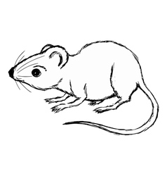 house mouse vector image