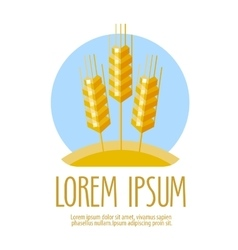 Wheat logo design template harvest or vector
