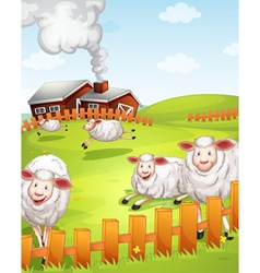 sheeps in the farm vector image vector image