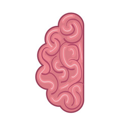 Isolated brain organ design vector