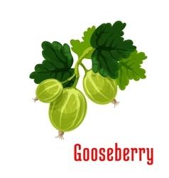 Gooseberry fruit botanical icon vector
