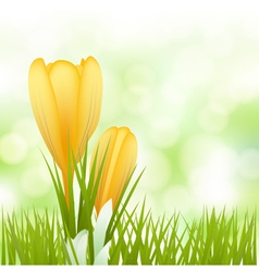 Spring yellow flowers background vector