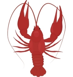 One boiled red crayfish crawfish vector