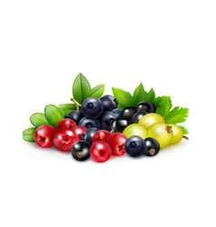 berry mix realistic concept vector image