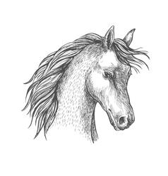 Head of arabian horse sketch symbol vector image vector image