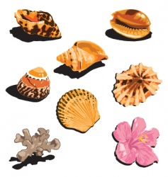 shells vector image vector image