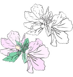Beautiful flowers mallow stencil and color variant vector