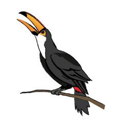 Toucan bird on the nature in brazil vector
