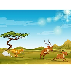 Cheetah chasing deers in the savanna vector image