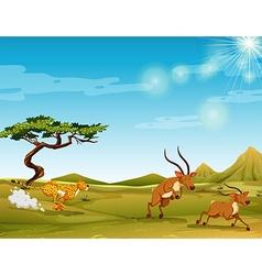 Cheetah chasing deers in the savanna vector