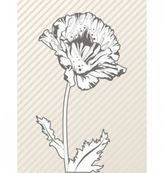 hand drawn poppy flower vector image vector image