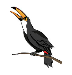 Toucan bird on the nature in brazil vector