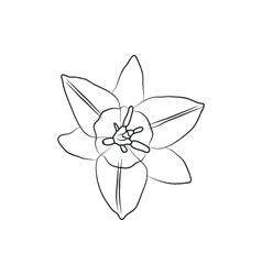 Iris flower simple black lined icon on white vector