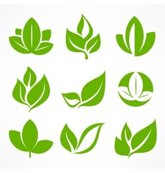 Green leaf signs vector image vector image