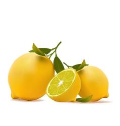 Lemons realistic vector