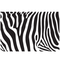 Zebra texture vector image