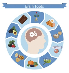 Brain foods infographics vector