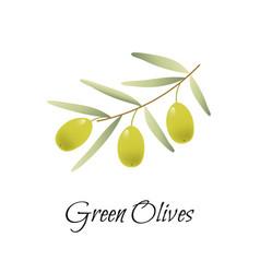 green olives branch logo label vector image