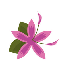 Flower daylily beautiful flora vector