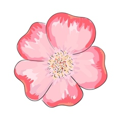 Dog rose flower vector image