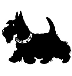 scottish terrier black and white vector image vector image