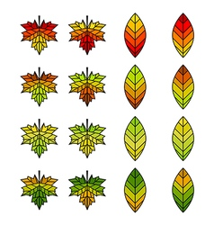 Autumn leaf collection vector