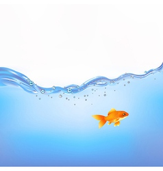 Goldfish in water vector