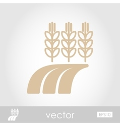 Ears of wheat barley or rye on field icon vector
