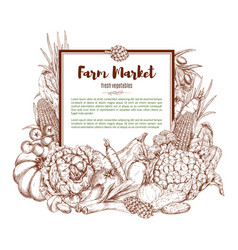 Sketch poster of farm vegetables vector