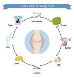 Strong bones foods infographics vector