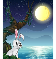 A rabbit and the bright full moon vector image vector image