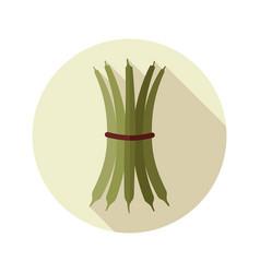 green bean flat icon vegetable vector image