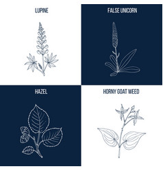 Set of four hand drawn eatable and medicinal vector