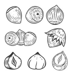 Set of hazelnuts icons isolated on white vector